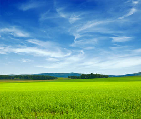 Beautiful summer landscape. Sky and grass.