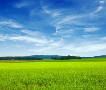 Panorama di bella estate. Cielo ed erba.