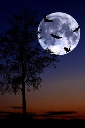 bats from tree over full moon photo