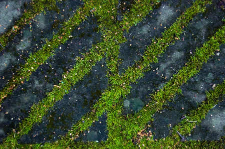Abstract autumn background. Moss and stone. Stock Photo - 9883102