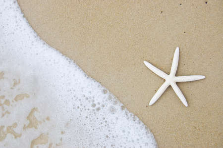 caribbean island: starfish on the beautiful beach