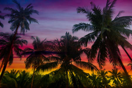 lush foliage: beautiful sunset in tropical forest Stock Photo