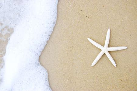 starfish on the beautiful beach photo