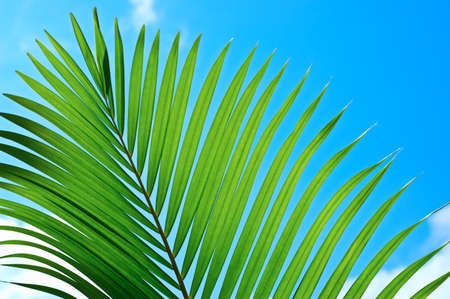 Palmtree branch on cloudy sky. Stock Photo - 9873914
