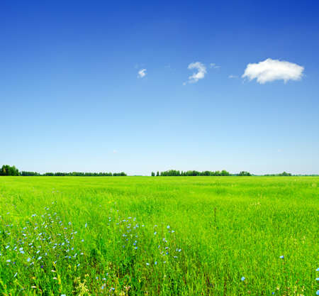 Summer landscape. Field and sky. photo