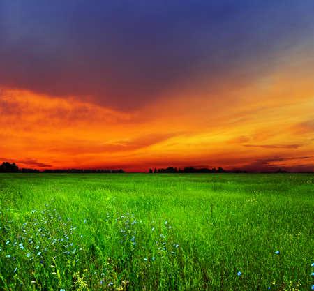 campo de flores: Paisaje de verano. Campo y cielo. Foto de archivo
