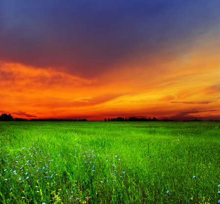 flowers field: Summer landscape. Field and sky. Stock Photo