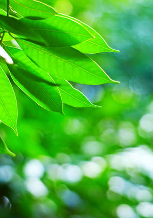 Green spring foliage. Shallow DOF. Stock Photo - 10034864