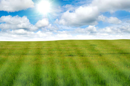 horizon over land: beautiful green meadow and blue sky