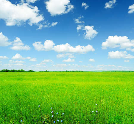 Summer landscape. Sky and green grass.  photo