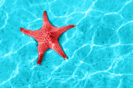 Starfish in blue water with light reflection. photo