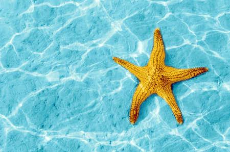 etoile de mer: Starfish dans l'eau bleue avec la r�flexion de la lumi�re.