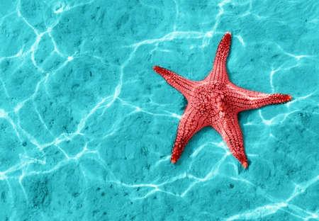 stella marina: Starfish in acqua blu con riflessi di luce.