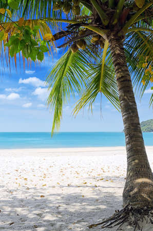 Green tree on a white sand beach. Stock Photo - 12322726