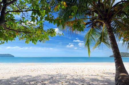 Green tree on a white sand beach. Stock Photo