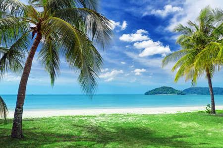 Grüne Baum auf einem weißen Sandstrand