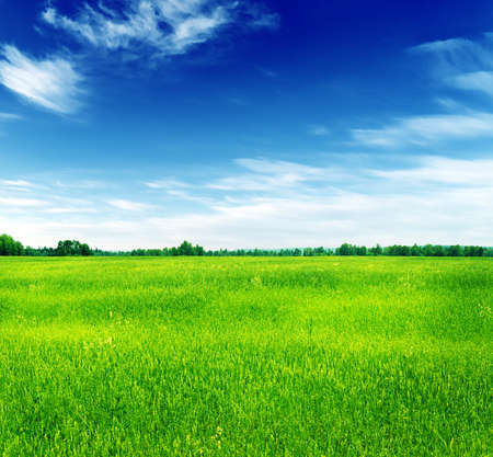 Summer landscape  Green grass and blue sky  photo