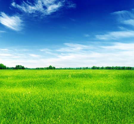 Summer landscape  Green grass and blue sky