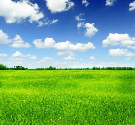 Summer landscape. Green grass and blue sky. photo