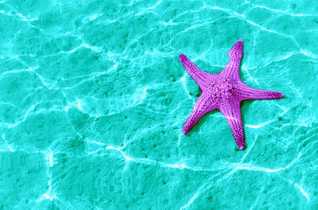 Starfish in blue water with light reflection  photo