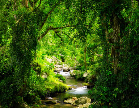 Stream in the tropical forest. photo
