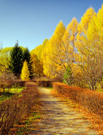 Coloured leaves in autumn park  photo