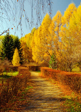 Colourful  leaves in autumn park. photo