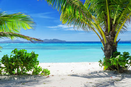 coconut trees: Green tree on a white sand beach. Malcapuya island, Coron, Philippines.