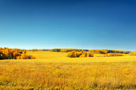 Autumn landscape. Yellow field and blue sky. photo