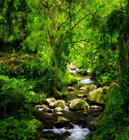 background waterfalls: Stream in the tropical forest. Stock Photo