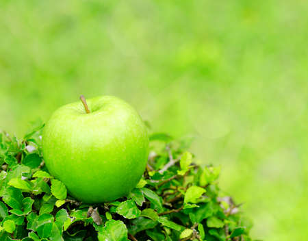 Green apple in a garden photo