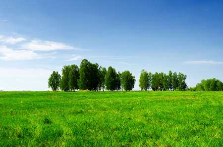 Green grass and blue sky. Summer landscape. photo