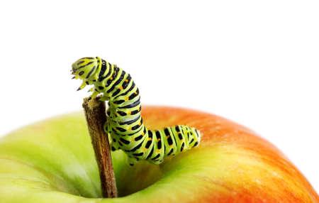 Green caterpillar on red apple. photo