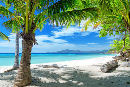 Green tree on a white sand beach. Malcapuya island, Coron, Philippines.