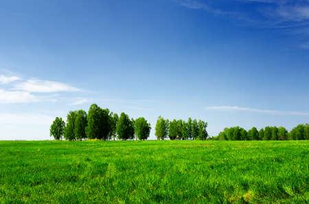 Green grass and blue sky. Summer landscape.