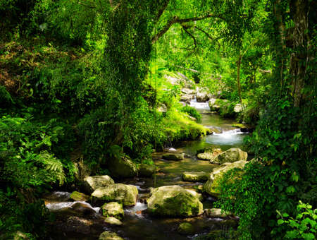 rock creek: Stream in the tropical forest. Stock Photo