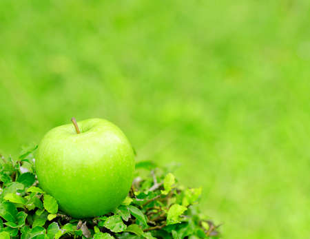 Green apple in a garden. Shallow DOF. photo