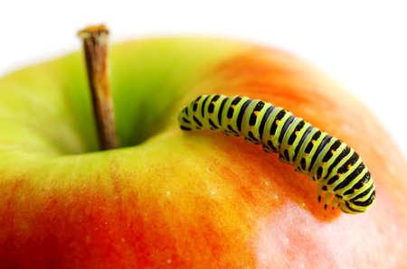 Chenille verte sur la pomme rouge. Banque d'images - 15229295