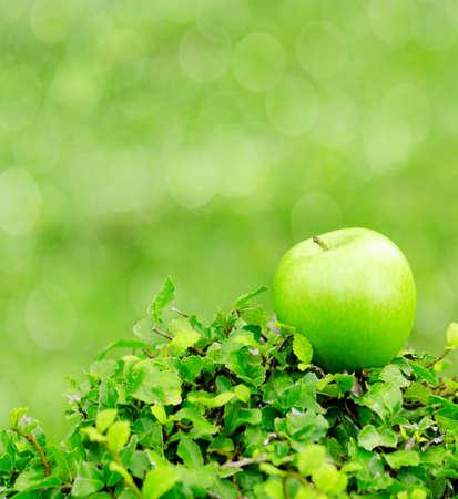 Green apple in a garden. Shallow DOF. photo