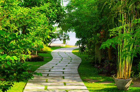 palm garden: Way to beach in tropical resort.