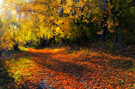rural scenes: Beautiful autumn landscape. Fall season.