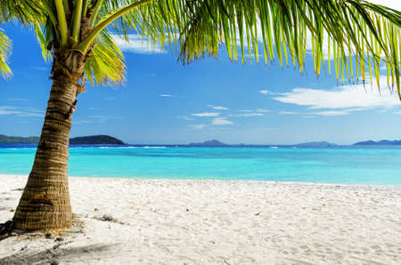 white sand beach: Green tree on  white sand beach. Malcapuya island, Palawan, Philippines.