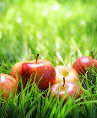 Red apples on green grass. photo