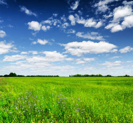 Green field under the blue sky. Summer landscape. photo