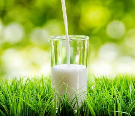 milk milk products: Vaso de leche en el fondo la naturaleza. Foto de archivo