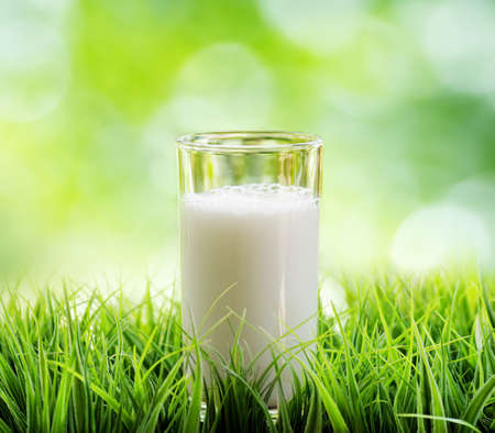 Glass of milk on nature background.