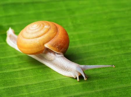 Snail creeps on green leaf.
