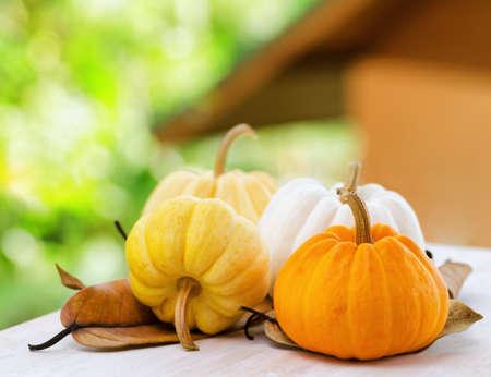 Pumpkins on rural landscape background  Stock Photo