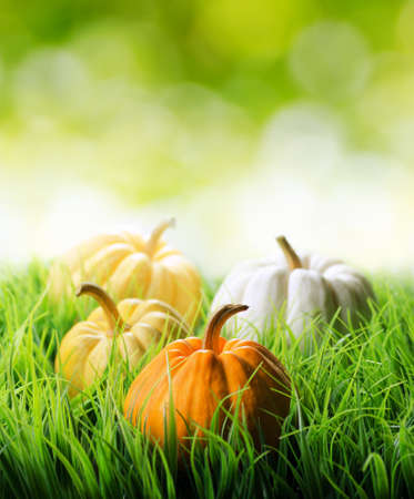 Pumpkins in green grass on natural background