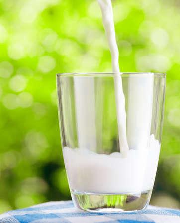 vacas lecheras: Vaso de leche en el fondo de la naturaleza Foto de archivo
